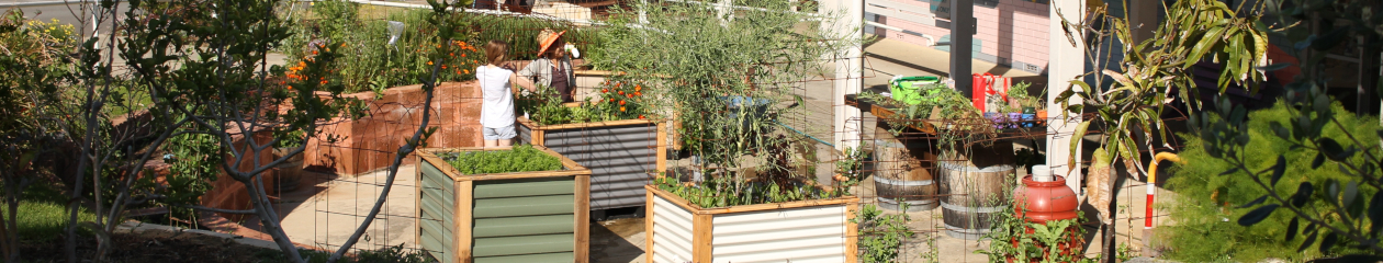 Duncraig Edible Garden